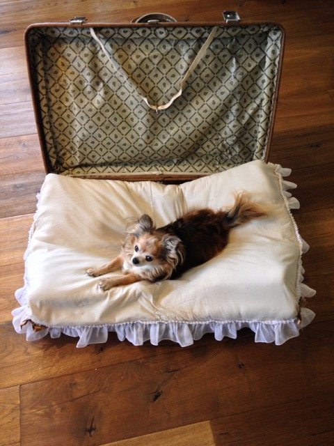 hundebett selber machen aus einem alten koffer. Black Bedroom Furniture Sets. Home Design Ideas