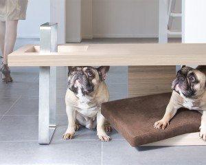 Luxus Hundebett Tisch