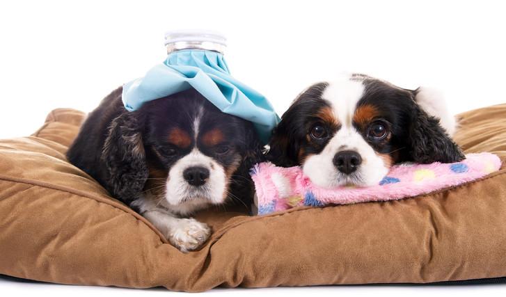 Hundekörbchen Hundebett Hundekissen