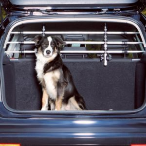 Hundegitter Auto
